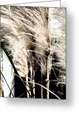 Feather Grass Greeting Card