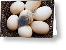 Feathered Eggs Greeting Card