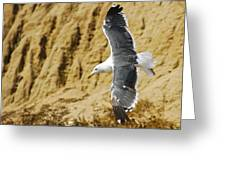 Feathered Friend Cruising Greeting Card