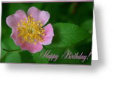February Birthday Greeting Card