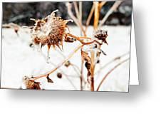 February Sunflower Greeting Card