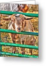 Feed Me Or I Will Eat You Lol Greeting Card