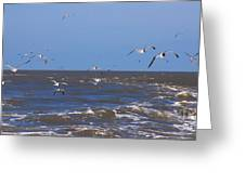 Feed Us - Ferry To Galveston Tx Greeting Card by Susanne Van Hulst
