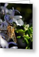 Feeding Bee Greeting Card