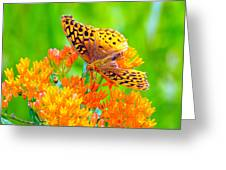 Feeding Butterfly Greeting Card