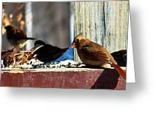 Feeding Frenzy Greeting Card