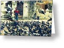 Feeding Pigeons Greeting Card