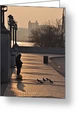 Feeding The Pigeons At Dawn Greeting Card