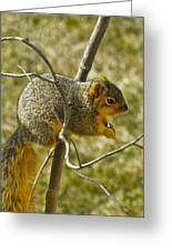 Feeding Tree Squirrel Greeting Card