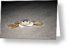 Feeling Crabby This Evening Greeting Card