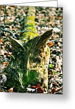 Feline Carved In Nature Greeting Card