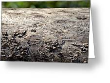 Fell By The Mighty Bark Beetle Greeting Card