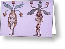 Female And Male Mandrake, Alchemy Plant Greeting Card