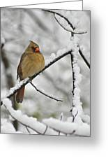 Female Cardinal 3656 Greeting Card