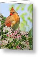Female Cardnial In Wegia Digital Art Greeting Card