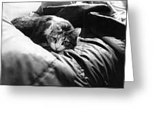 Female Cat Laying Down Greeting Card