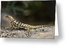Female Desert Spiny Lizard  Greeting Card