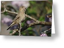 Female Finch Greeting Card