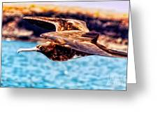 Female Frigate Bird Greeting Card