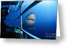 Female Great White And Underwater Greeting Card