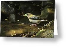 Female Grossbeak Greeting Card