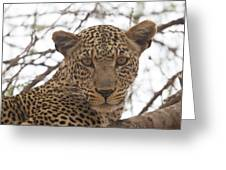 Female Leopard Close-up Greeting Card