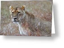 Female Lion Portrait Greeting Card