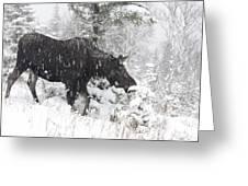 Female Moose In Snowy Forest, Gaspesie Greeting Card