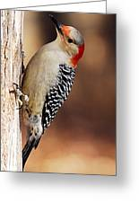 Female Red-bellied Woodpecker 5 Greeting Card