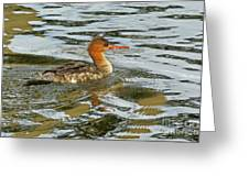 Female Red Breasted Merganser In The Spring Greeting Card