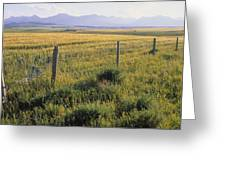Fence And Barley Crop, Near Waterton Greeting Card