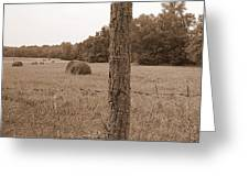 Fence And Field Greeting Card by Sheila Harnett