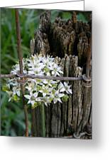 Fence And Flower Greeting Card