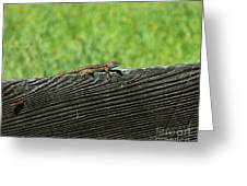 Fence Lizard Greeting Card