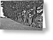 Fence Of Trees Greeting Card