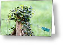Fence Port Greeting Card