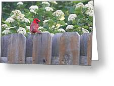 Fence Top Greeting Card
