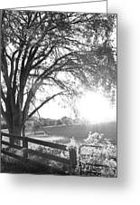 Fenced In Greeting Card