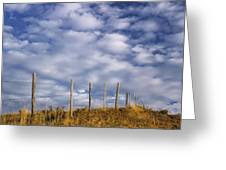 Fenceline In Pasture With Cumulus Greeting Card by Darwin Wiggett