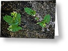 Fern And Coquina Greeting Card