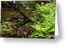 Fern Fallen Log And Stream Greeting Card