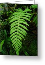 Fern Frond 0576 Greeting Card