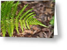 Fern Frond 1 Greeting Card