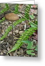 Fern Frond And Mushroom 5 Greeting Card