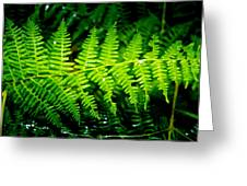 Fern II Greeting Card
