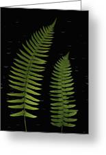 Fern Leaves With Water Droplets Greeting Card