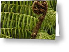 Fern Palm New Zealand Greeting Card