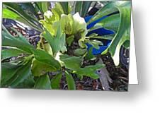 Fern With Blue Bucket Greeting Card