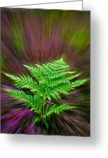Fern Zoom Greeting Card
