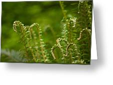 Ferns Fiddleheads Greeting Card